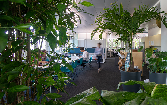 employee working in an office with many green plants